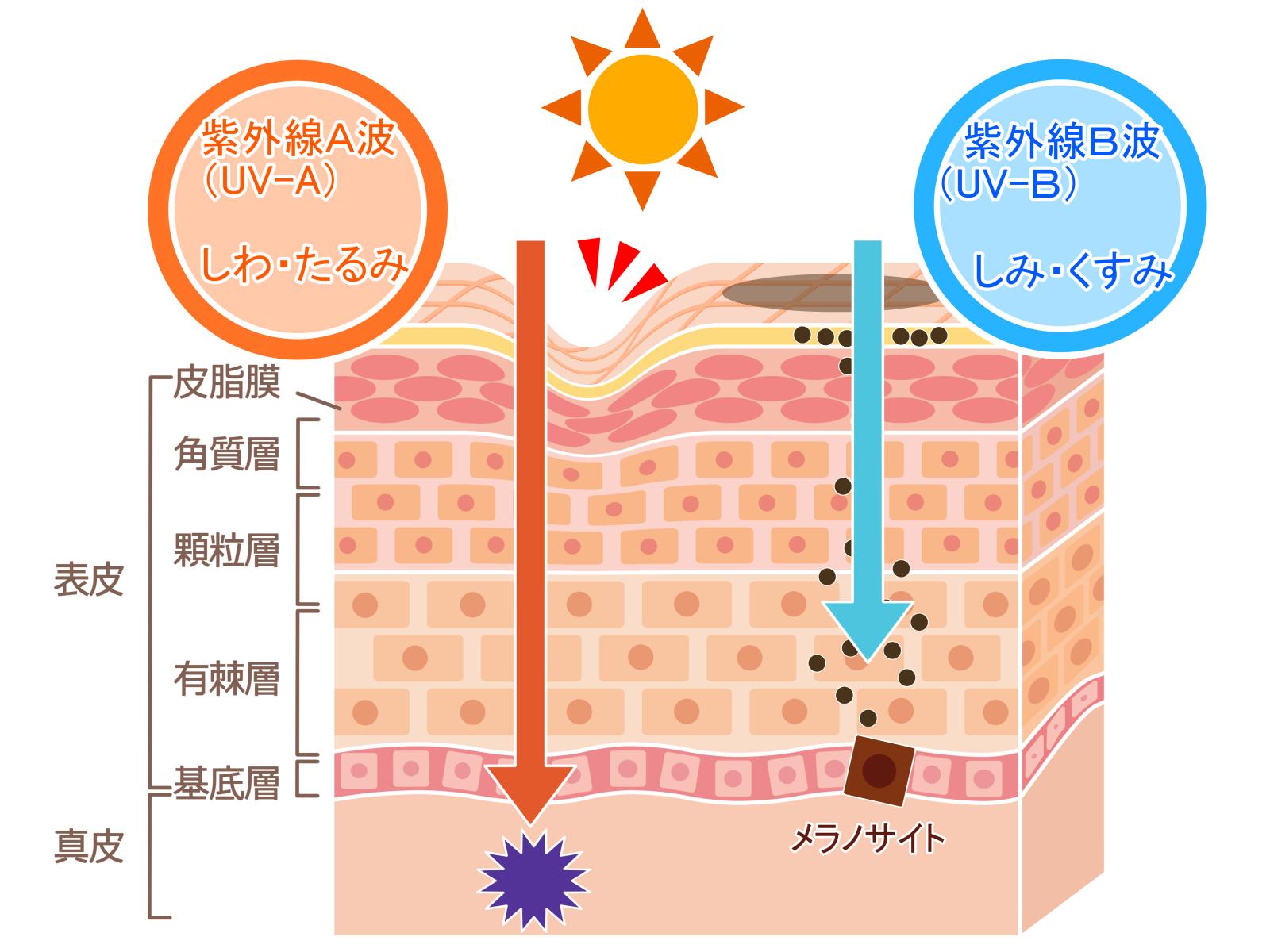 紫外線A波